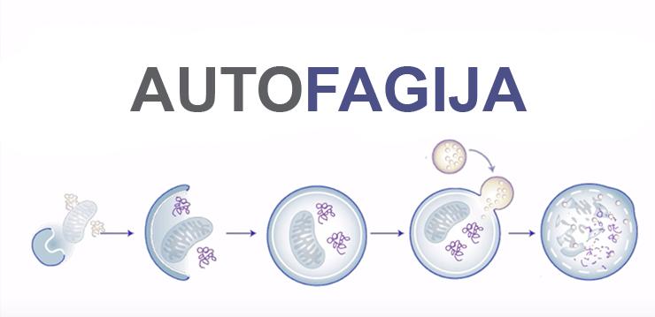 Šta je autofagija