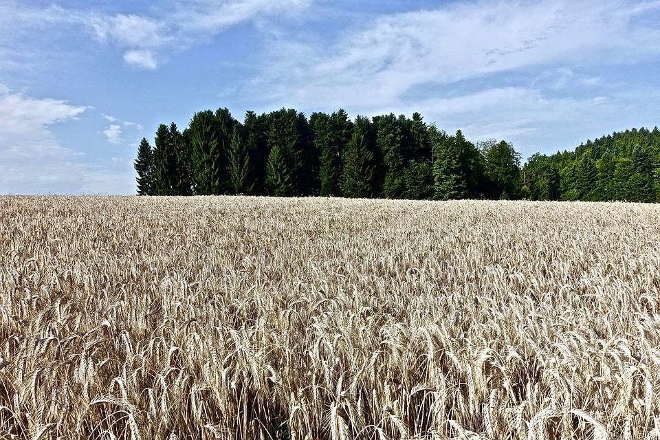 U paket hrane za čišćenje organizma ulaze integralne žitarice i mahunarke