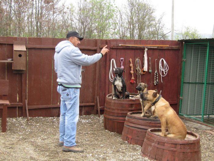 Dresura psa tri psa na buretu