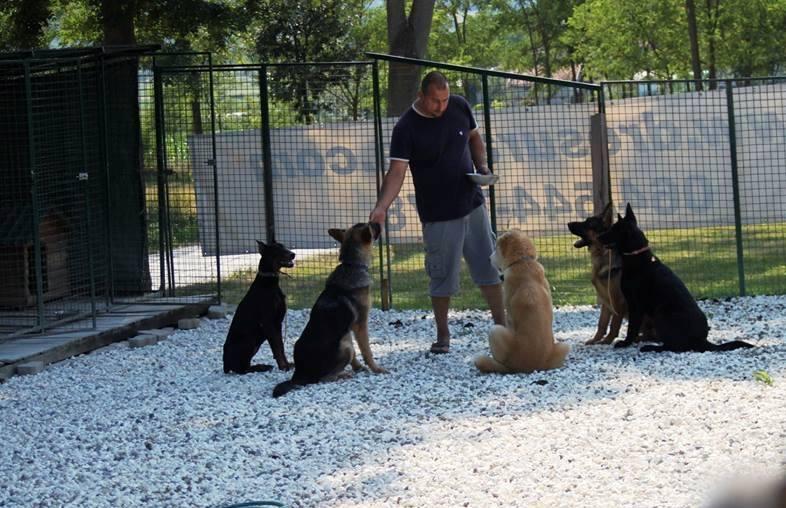 Dresura pasa Slaven sa psima