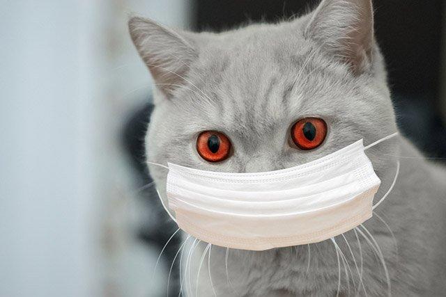 Crveno oko kod mačaka